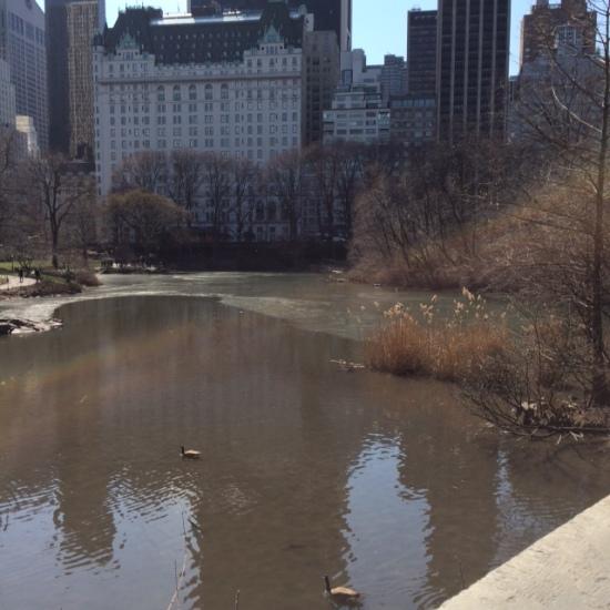 pond Plaza