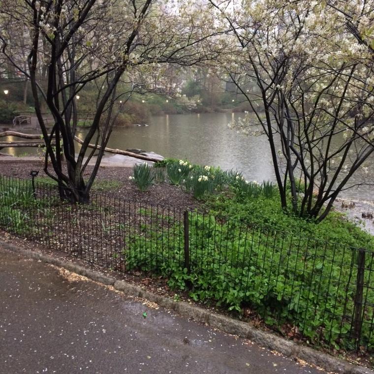 lake white tree rain