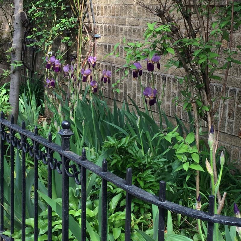irises railing Canva