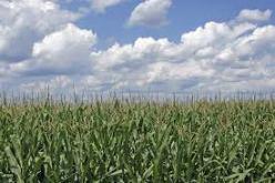 2 cornfields G