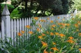 2 lilies and fence G