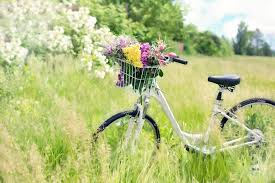 2 - meadow bicycle G