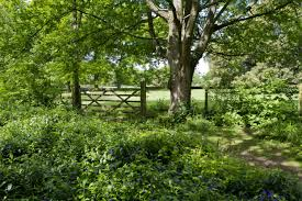 5 Kate's farm summer trees fence.jpg!d - Copy