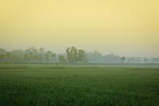 winter-morning-rice field