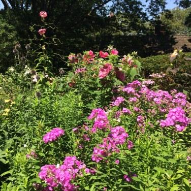 SG phlox and roses