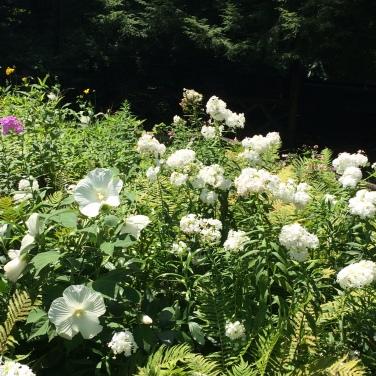 SG white flowers
