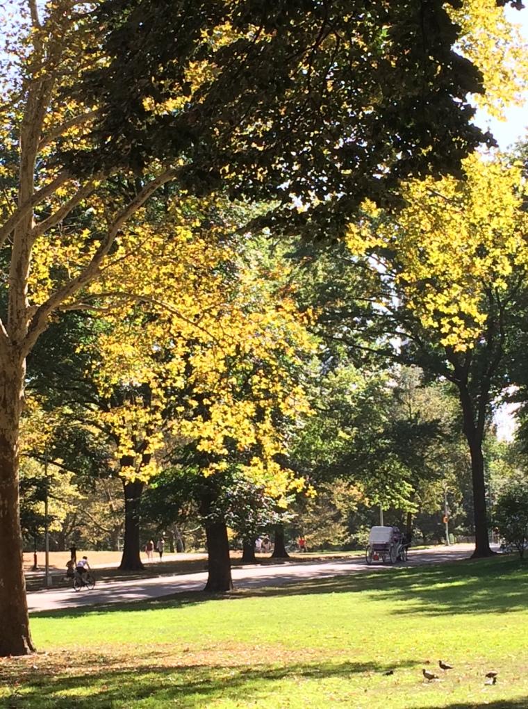 1 trees yellow