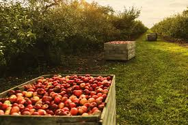 2 box red apples
