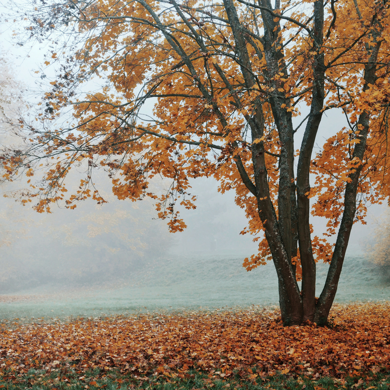 autumn mist and leaves