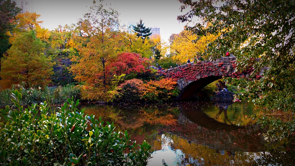 CP autumn bridge
