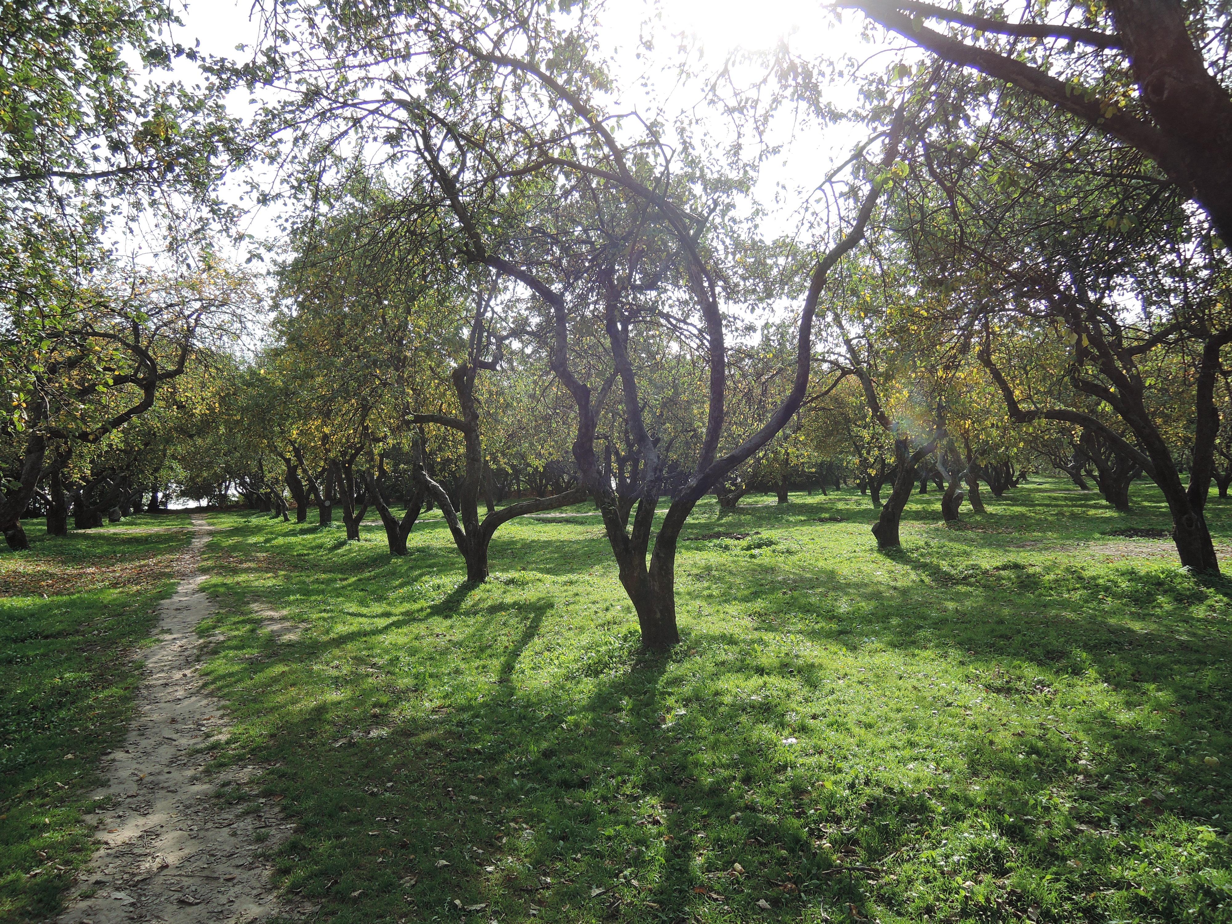 orchard path fall
