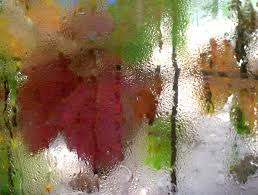 rainy leaves window