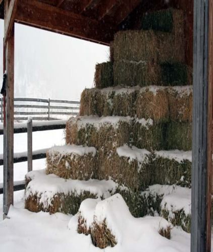 bales of hay and snow