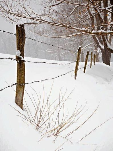 barbed wire in snow