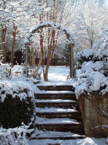 arbor snow
