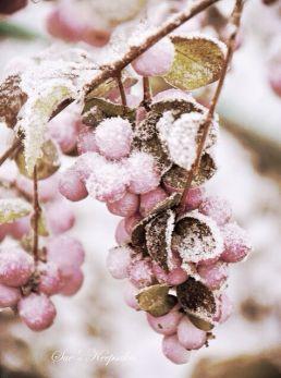 pink berries frost