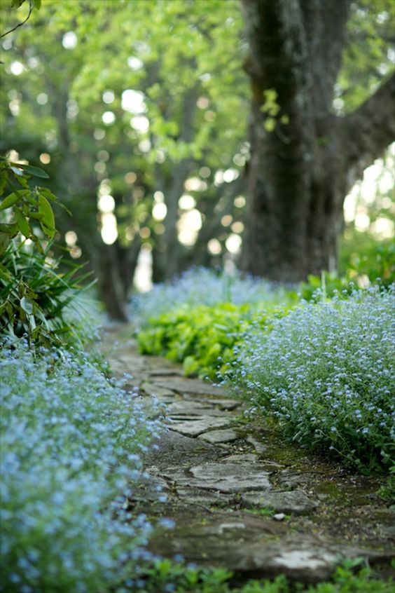 GH forget-me-nots