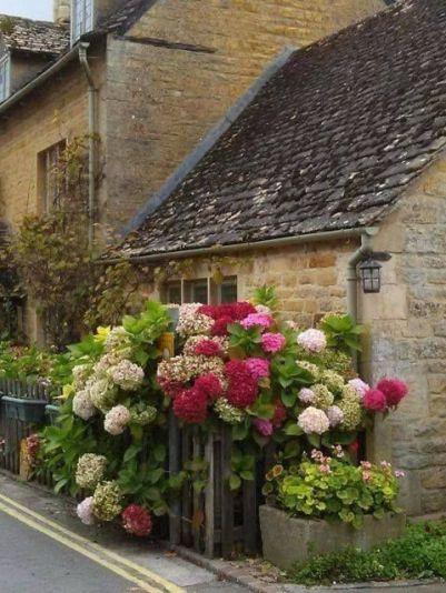 hydrangeas cottage
