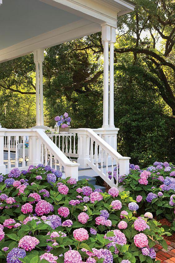 hydrangeas porch