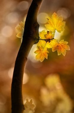 yellow leaves sunlight