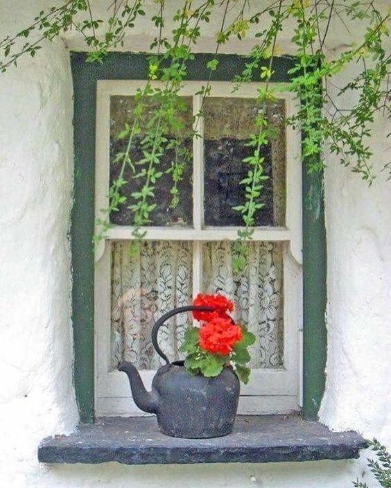 window kettle flowers