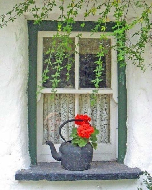 window kettle flowers
