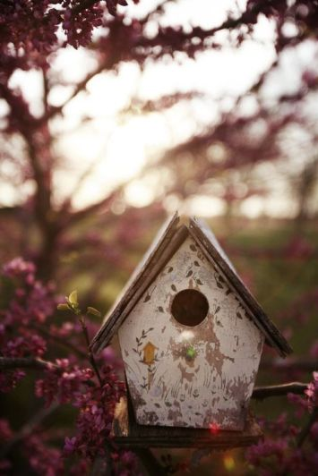 birdhouse sunset