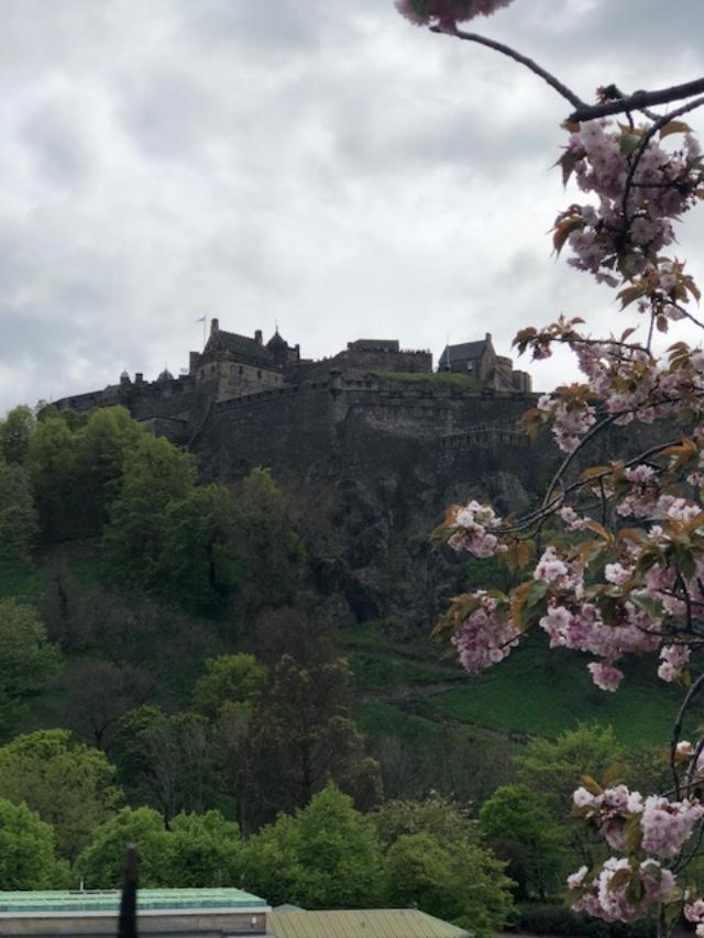 E castle blossoms