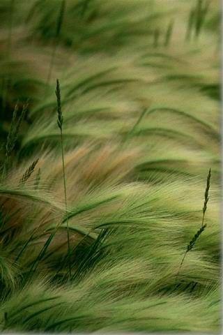 1 green grass