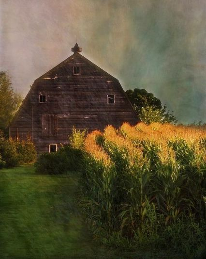 barn and corn