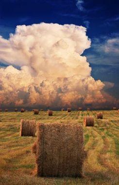 rolls of hay 2