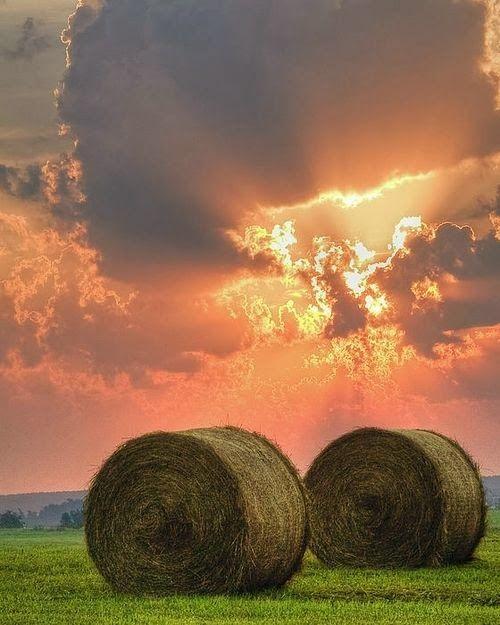 rolls of hay sunset