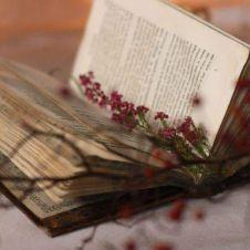 U book sprig