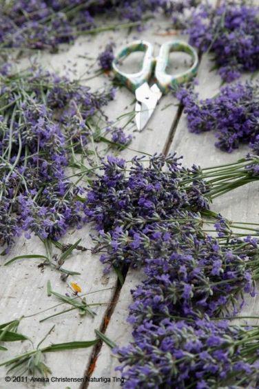 U lavender
