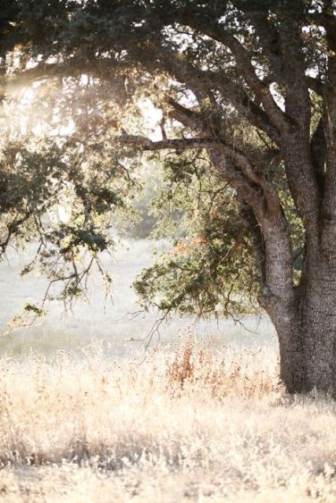 U summer tree