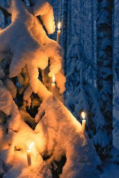 U tree candles