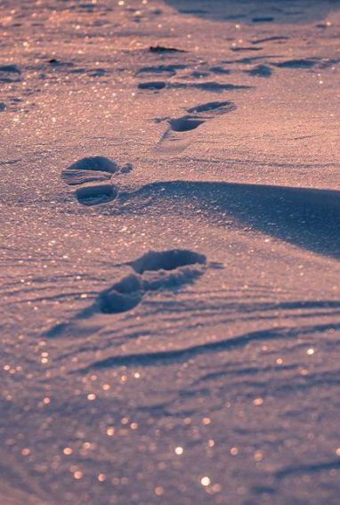 1footprints